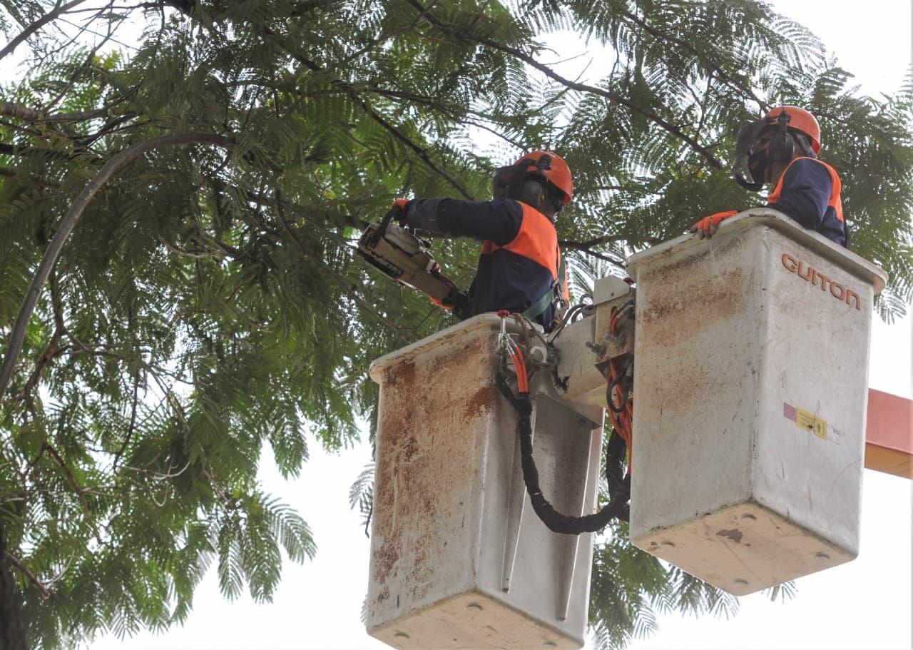 Serviços de poda em árvores deixam áreas rurais sem energia