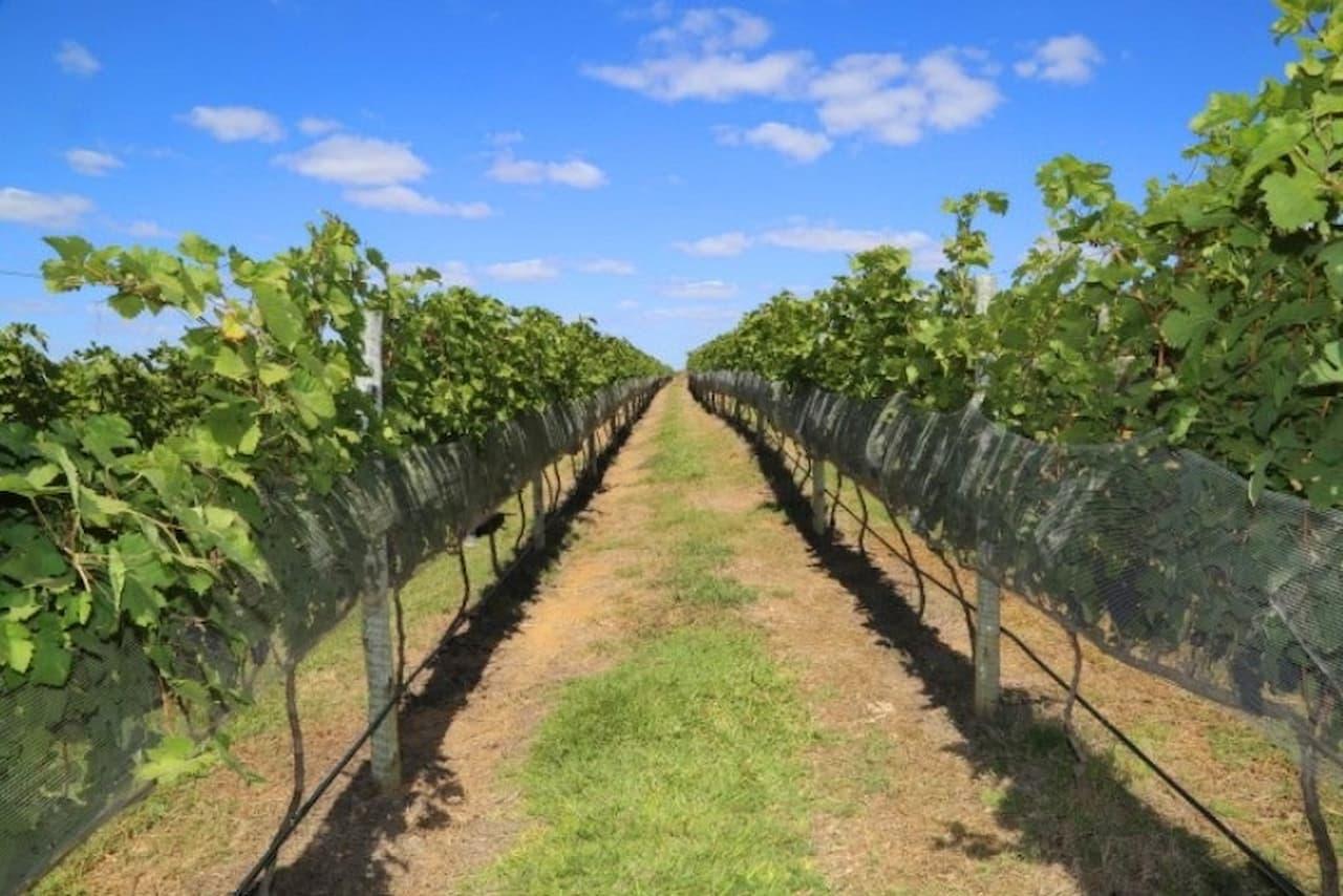 Alta gastronomia e vinhos, um caminho aberto ao DF