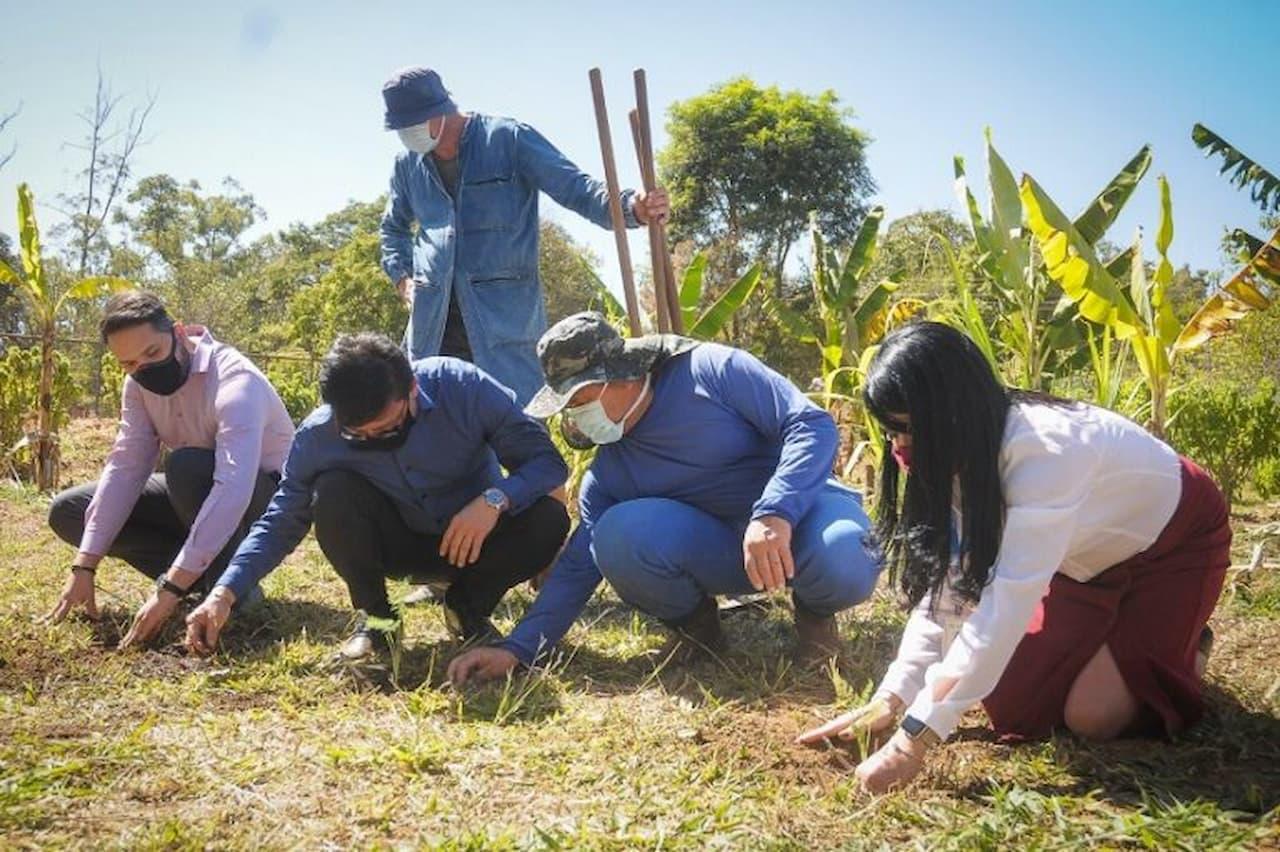 Farmácia Viva adota cultivo biodinâmico de plantas medicinais