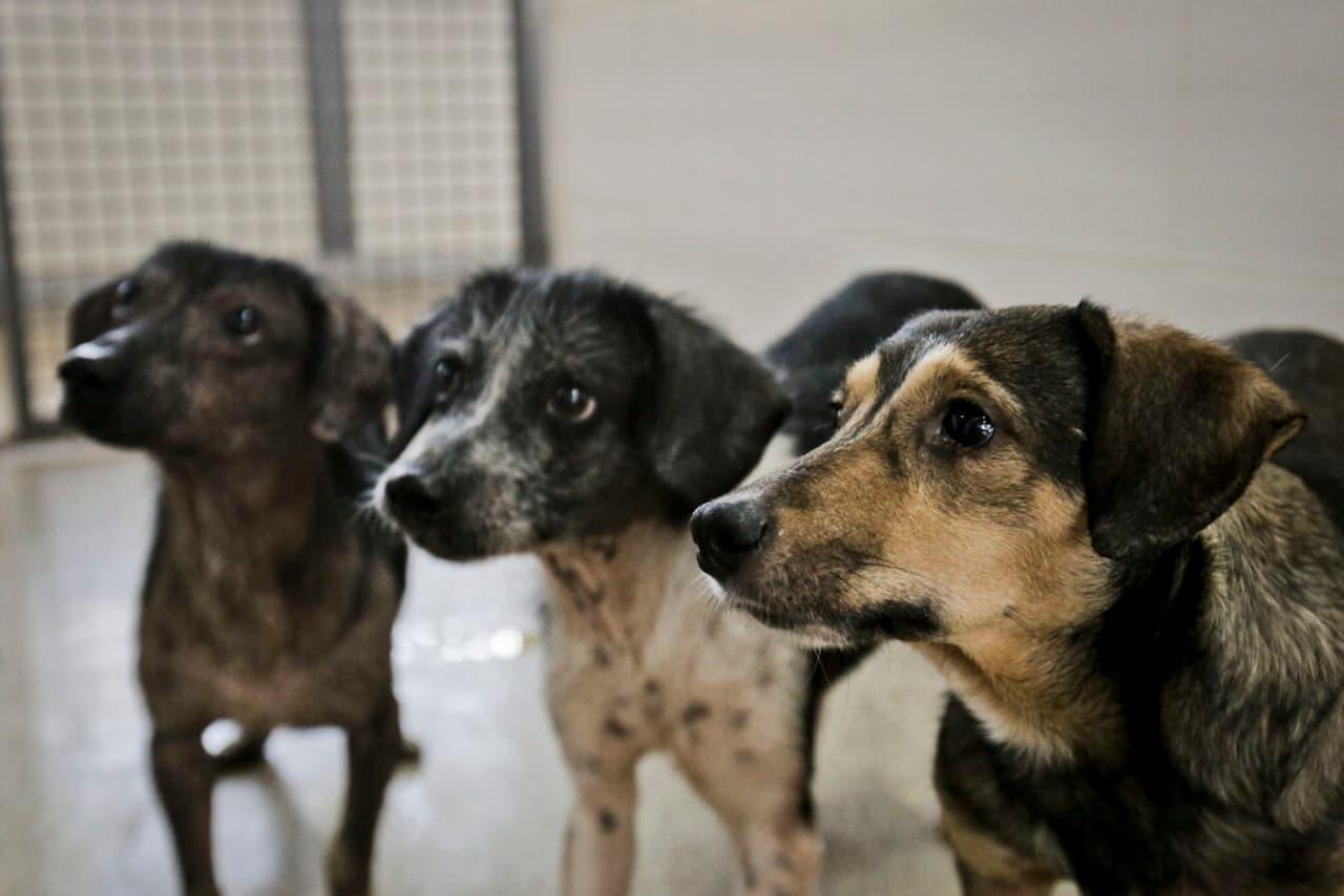 27.8-doação-pets-FOTO-BRENO-ESAKI-AGÊNCIA-SAÚDE-DF (1)