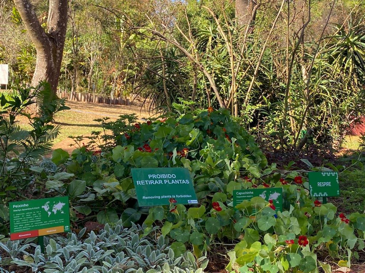 31.8-plantas-do-jardim-botânico-novas-placas-identificação-foto-divulgação-JBB