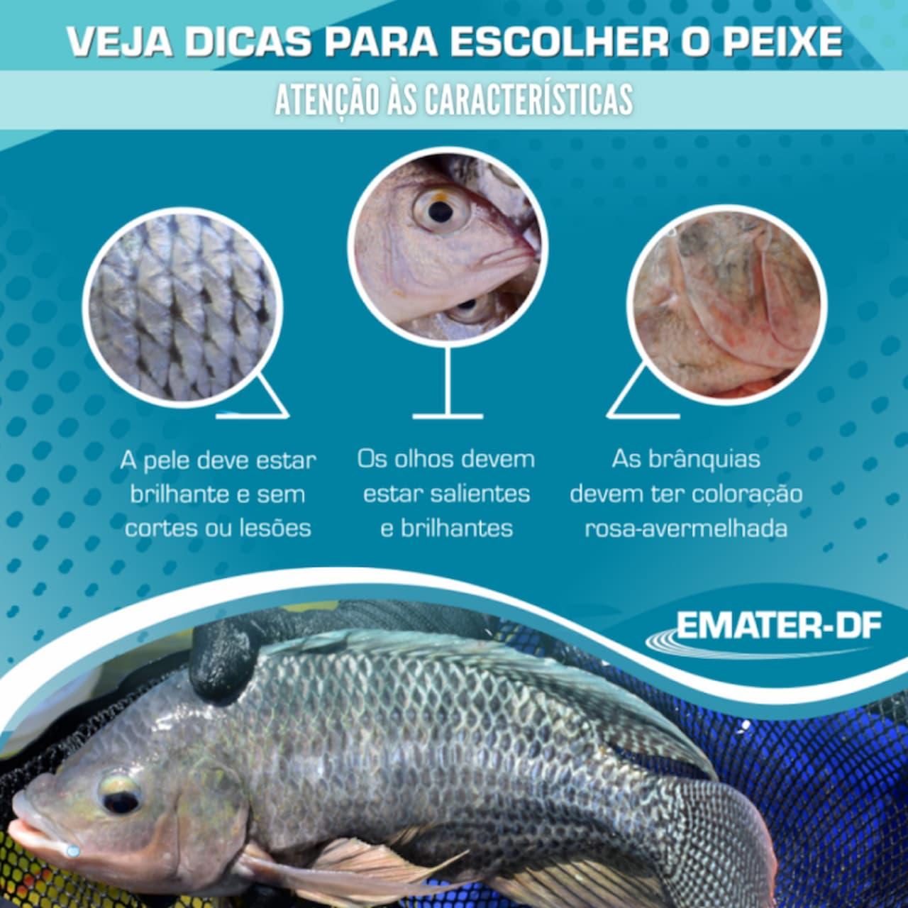 1.9-Peixe_Dicas-emater-DF