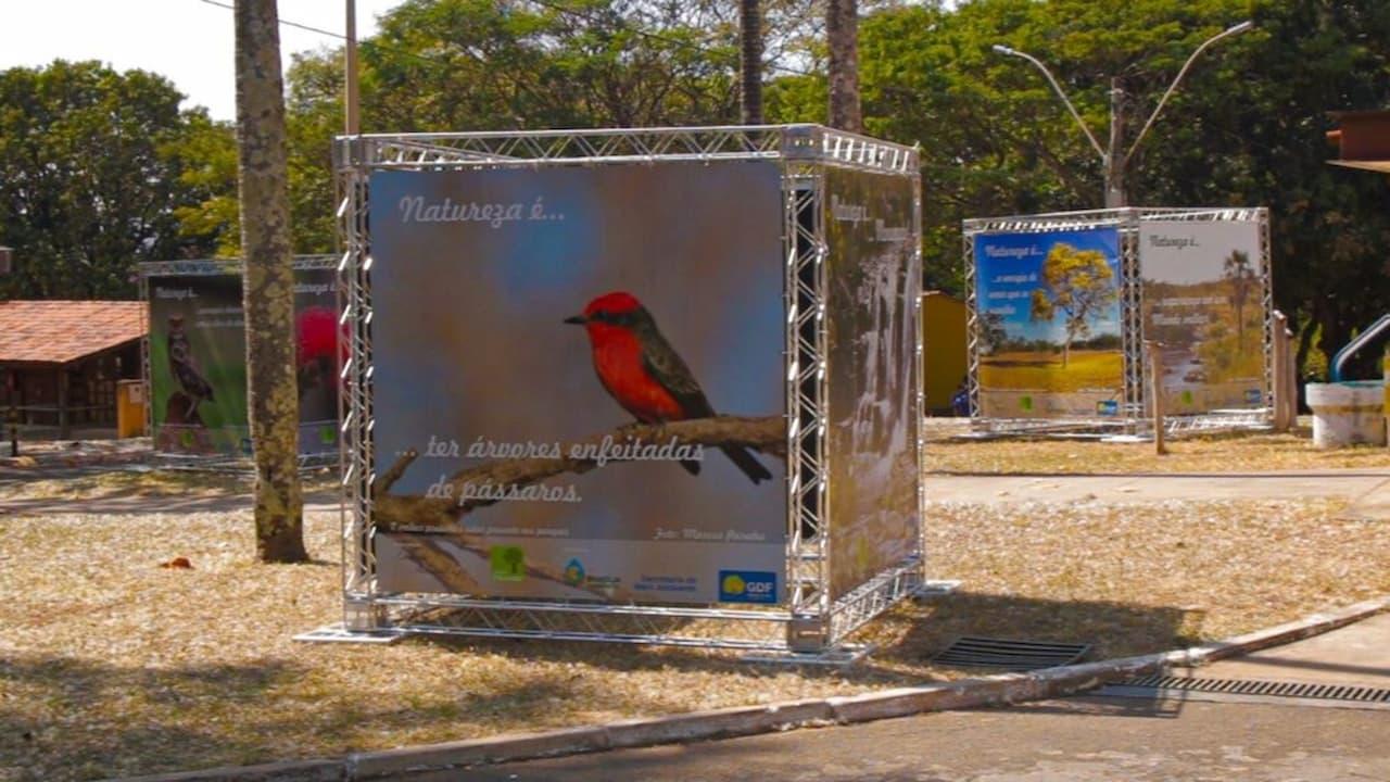 11.9-dia-do-cerrado-foto-divulgação-Brasília-Ambiental