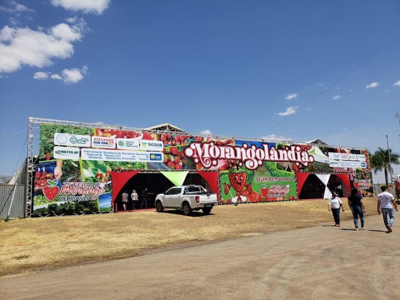 Produtores vendem 60 mil caixas de morango na feira em Brazlândia