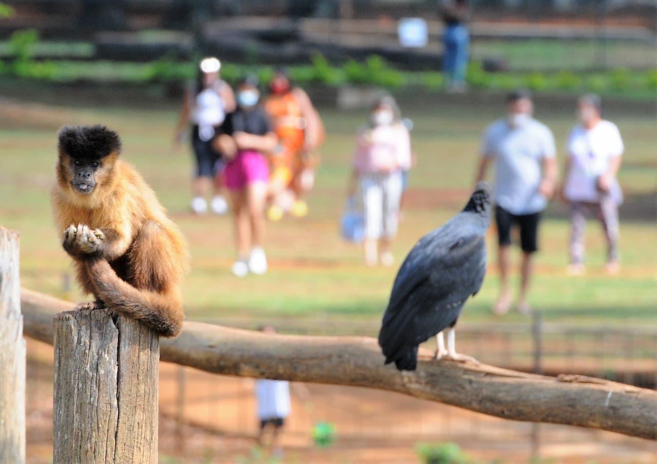 Zoológico continua sendo o xodó das comemorações