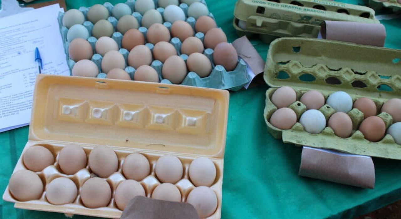 9.10-ovos-foto-divulgação-EMATER-DF